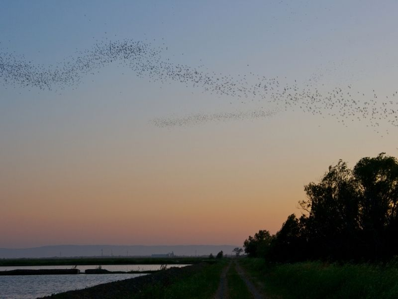 sunset with bats flying in formation over the trees
