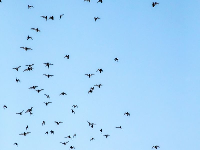 a close up of bat silhouettes against a pale blue sky