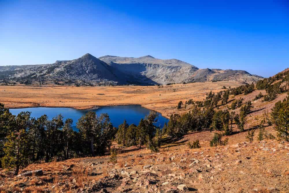 orange-brown dry grass around gaylor lakes in yosemite