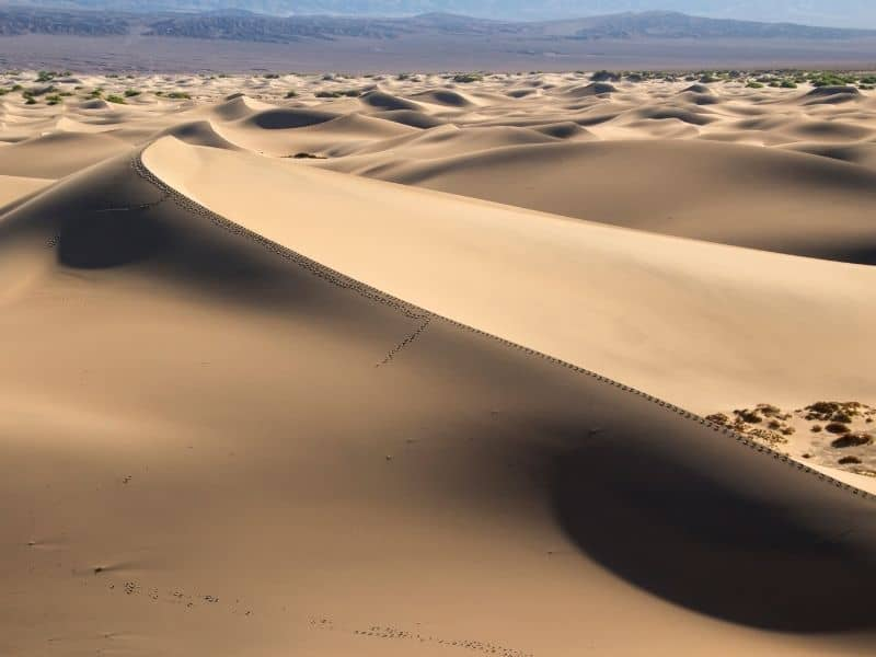 the white-gold sand dunes of mesquite flats in death valley in a day