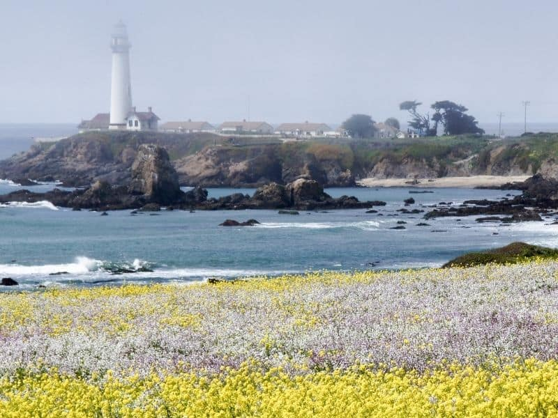 the lighthouse of pescadero california with mustard flowers in front