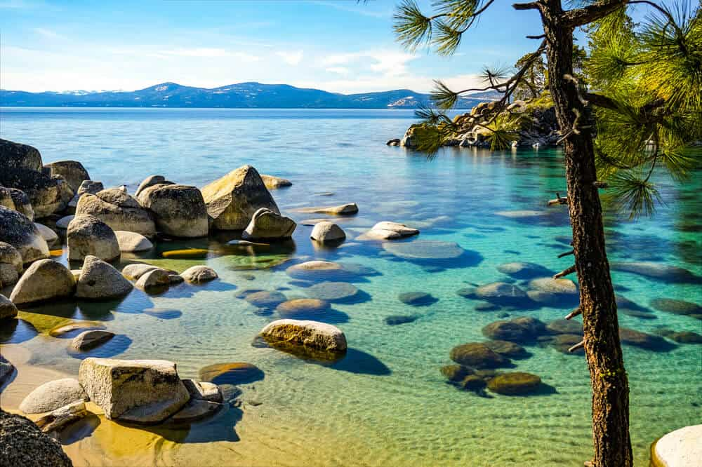 clear waters and rocks in the shoreline with a pine tree in front at lake tahoe beach view