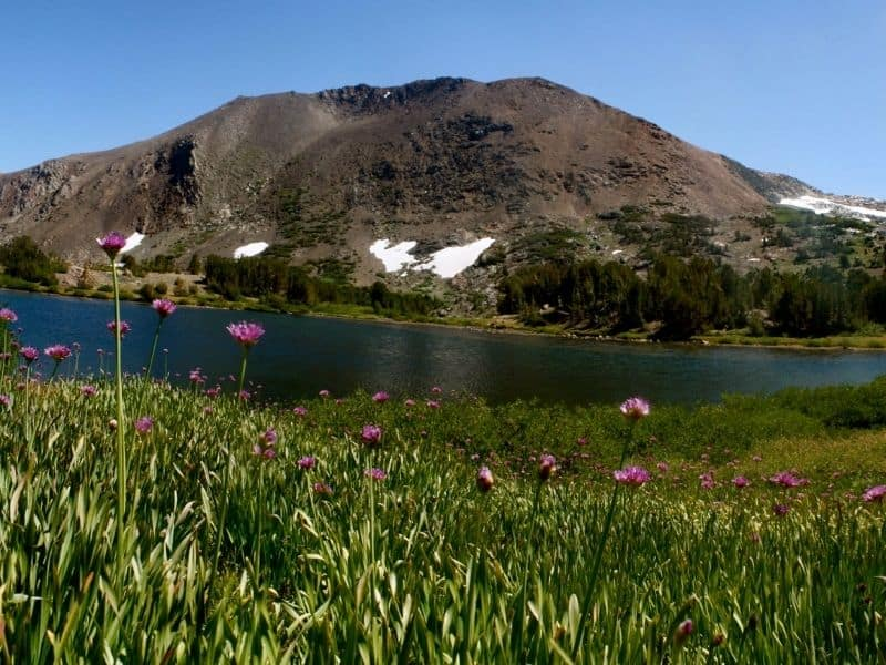 widlflowers next to the water at mono pass with a lake and a small mountain