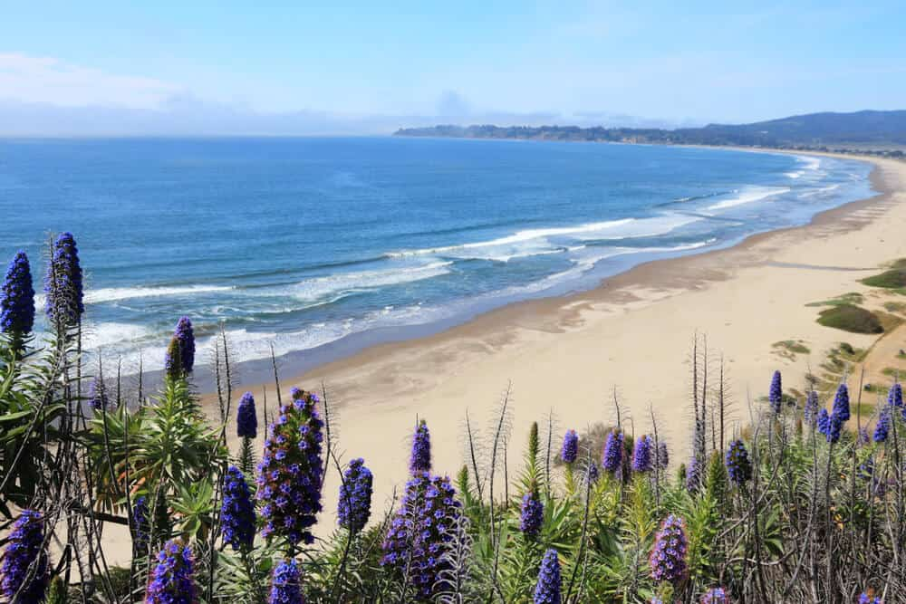 lupines in front of stinson beach a beautiful beach in northern california