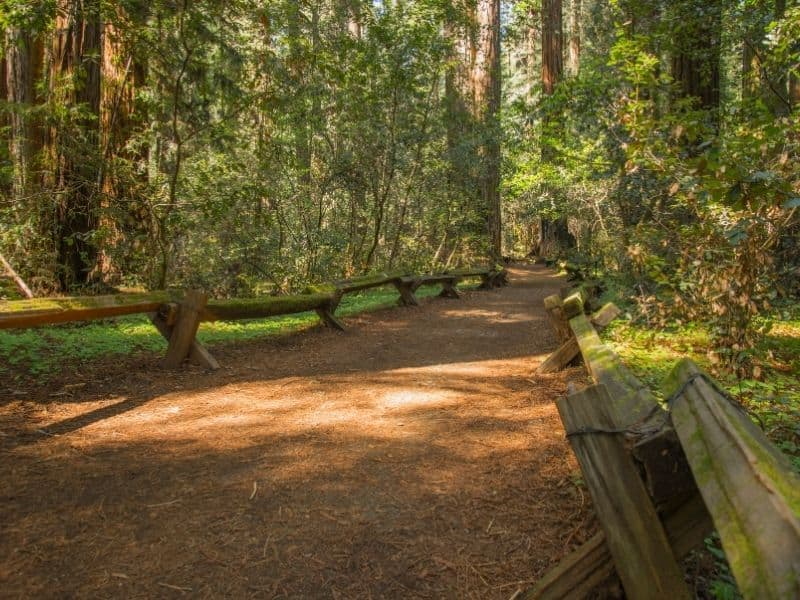 a redwood forest path in armstrong woods