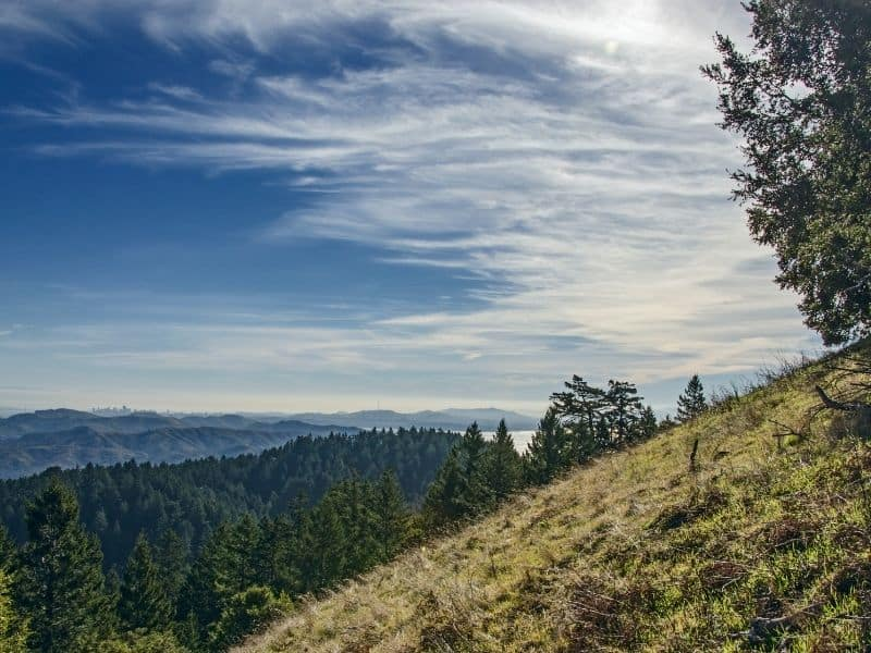 middle peak mt tam with browning grass and pine trees and water in the distance