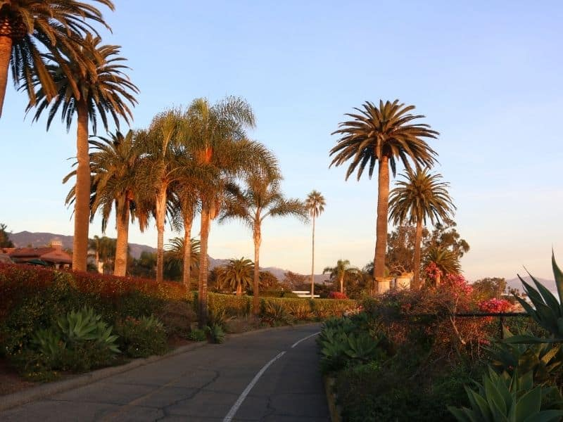 palm trees at sunset in the southern California beach town of Montecito near Santa barbara