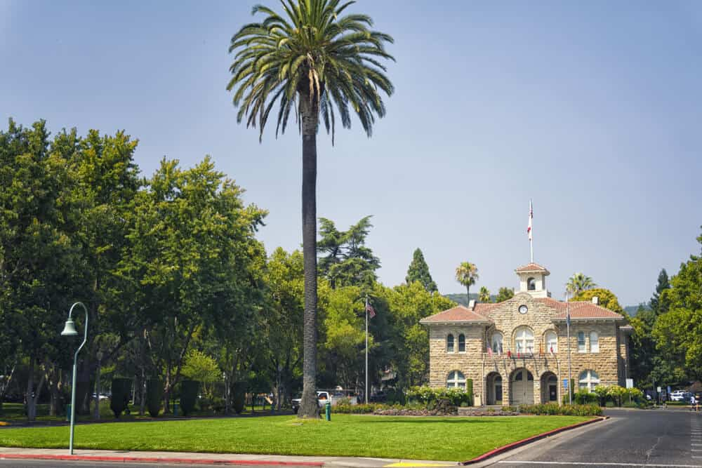 the city hall of sonoma framed by a very large palm tree in sonoma square