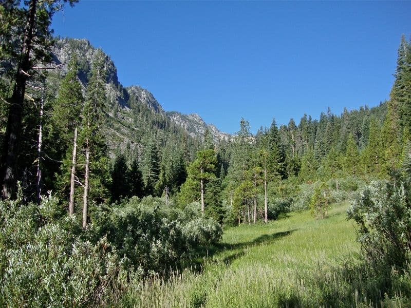 view of a meadow with conifer trees and granite mountains
