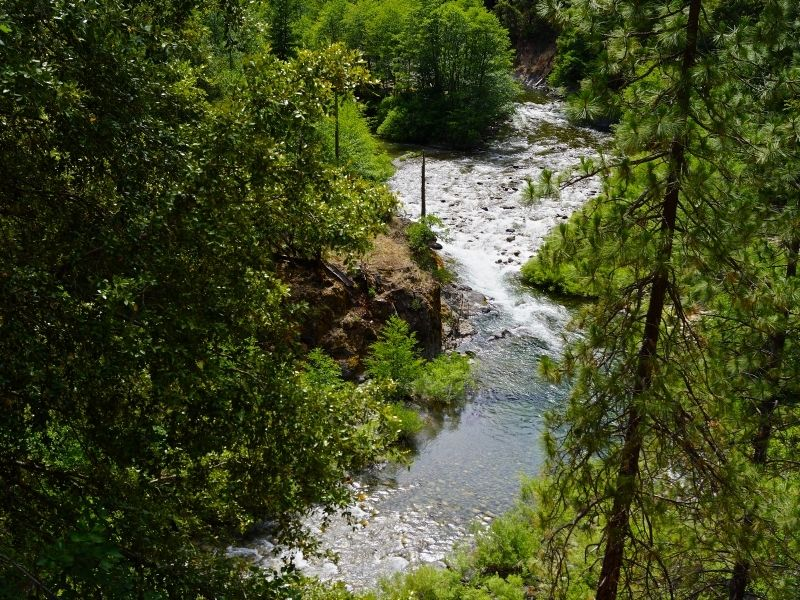view of a stream seen between green trees
