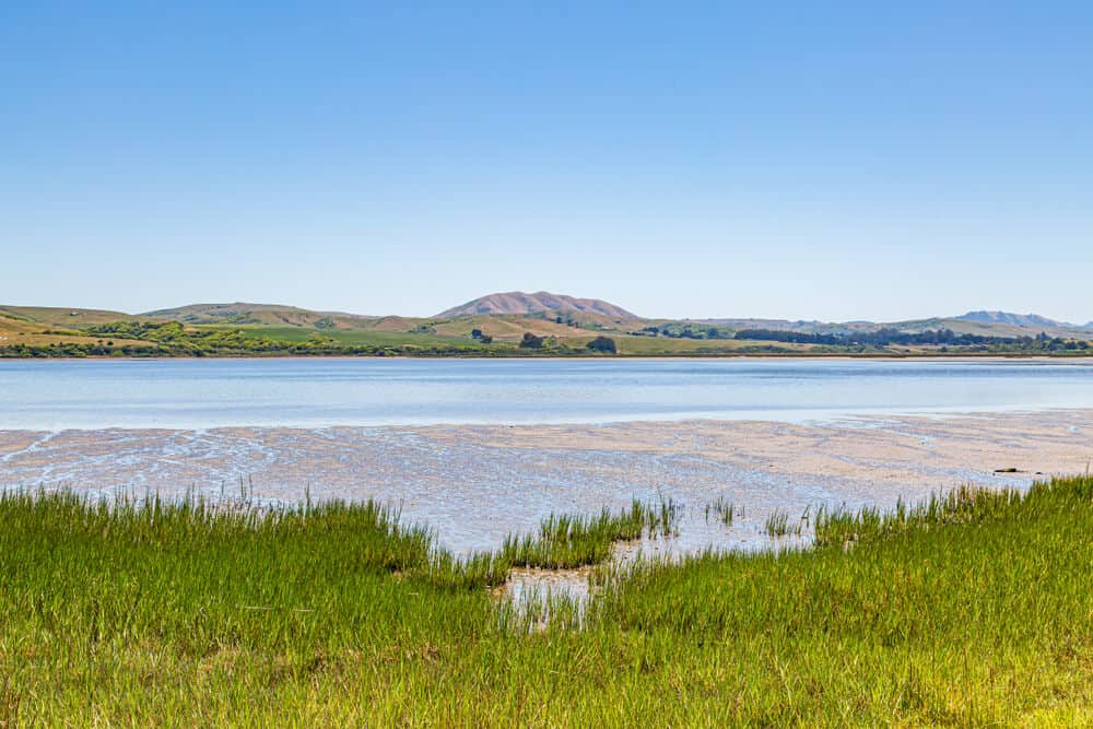 the waters of tomales bay california with grass in the foreground