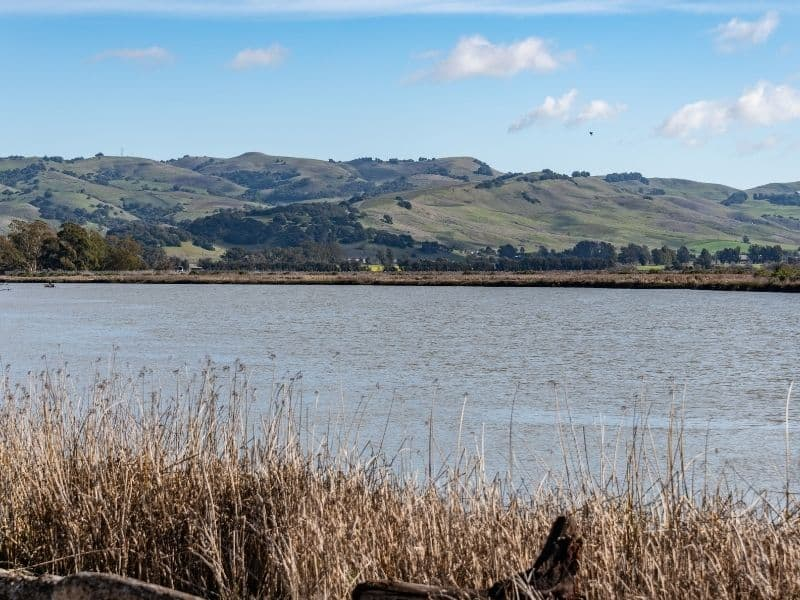 a view seen while bicycling along the napa river as part of this napa weekend itinerary
