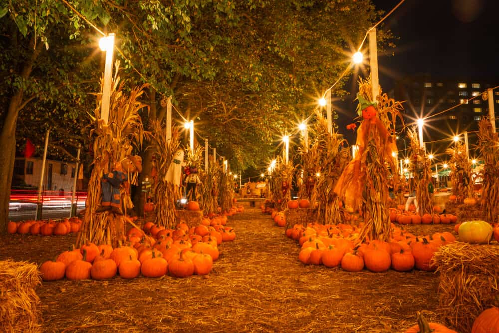 walking down a pathway surrounded by pumpkins in san francisco