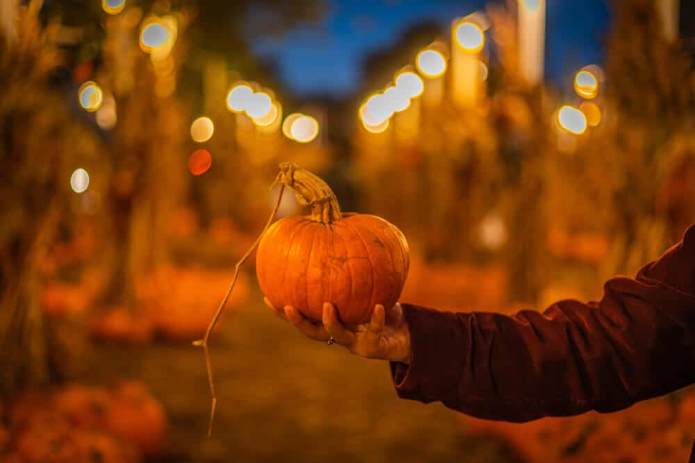 man's hand holding a pumpkin at a pumpkin patch in the evening with. lights behind him