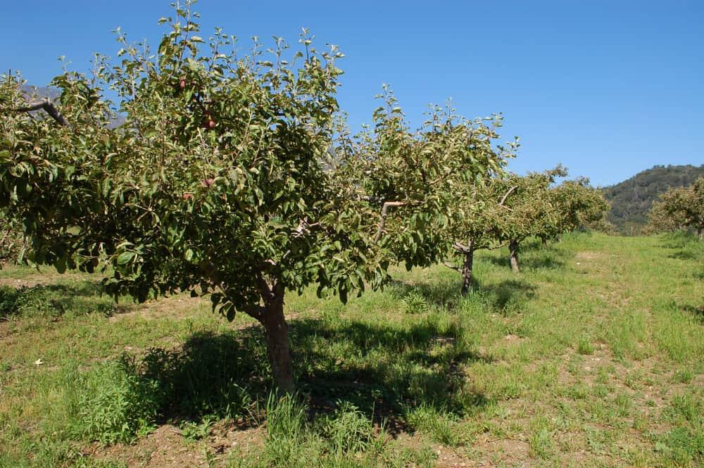 a u pick apple farm in julian california