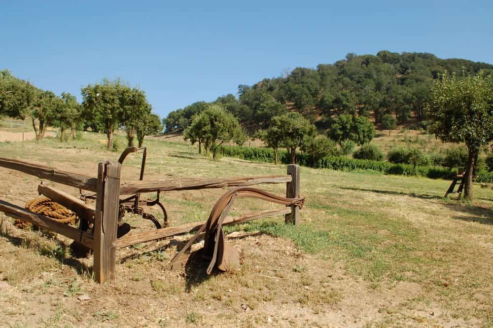 apple trees in california near a gate