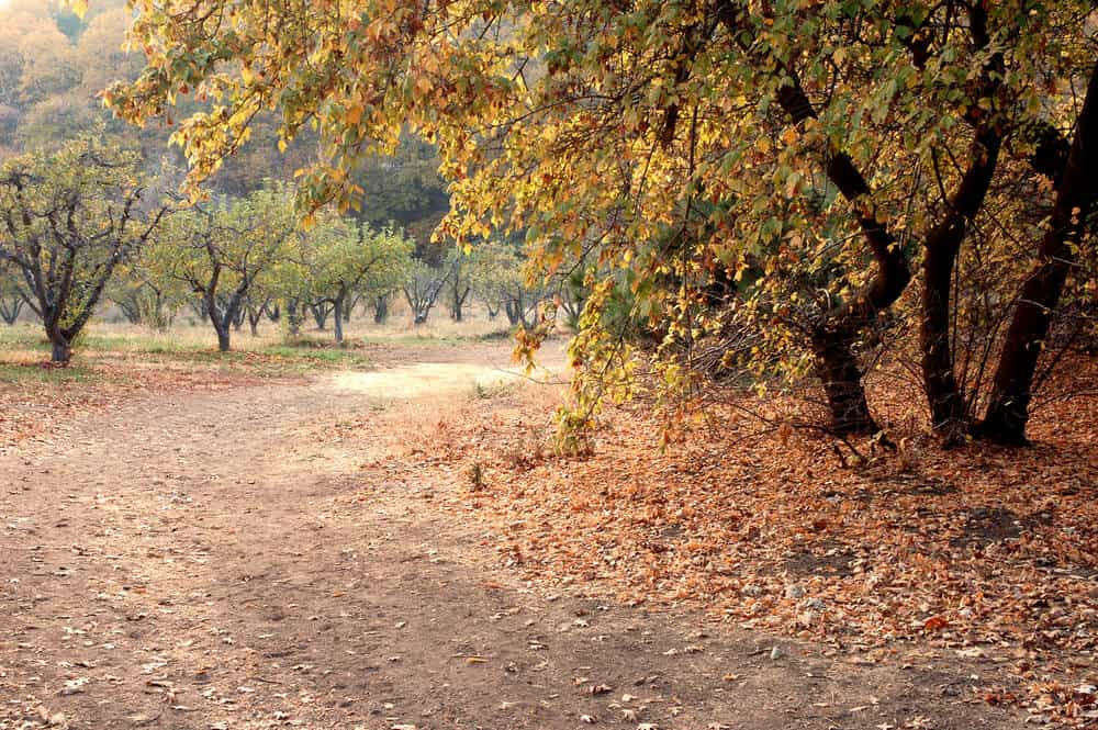 Fall colors while apple picking in Southern california along a hiking trail