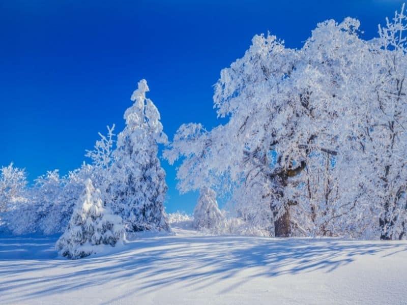 totally snow covered trees in lake arrowhead california against a dark blue sky