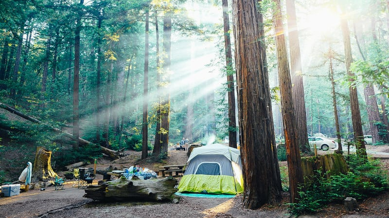 a green tent in the middle of a redwood forest camping in ventana