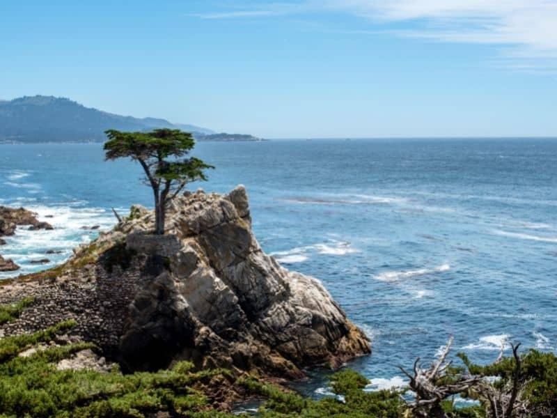 check out the lone cypress tree on the drive from san francisco to big sur - a tree on the edge of a cliff next to water.