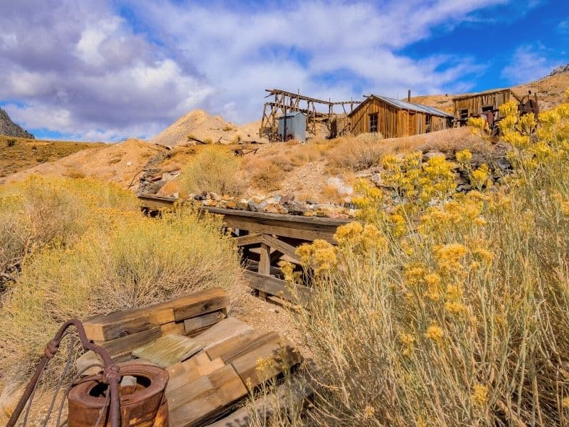 yellow wildflowers blooming at cerro gordo mines an abandoned ghost town in california