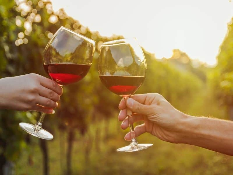 two hands making 'cheers' with wine glasses at a vineyard