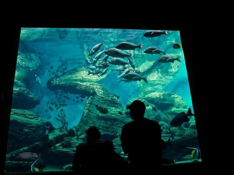 the aquarium in san diego with people looking at sea animals in the tanks silhouetted in black against the tank illumination