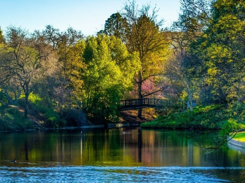 peaceful water around the arboretum in davis with beautiful trees in fall foliage colors