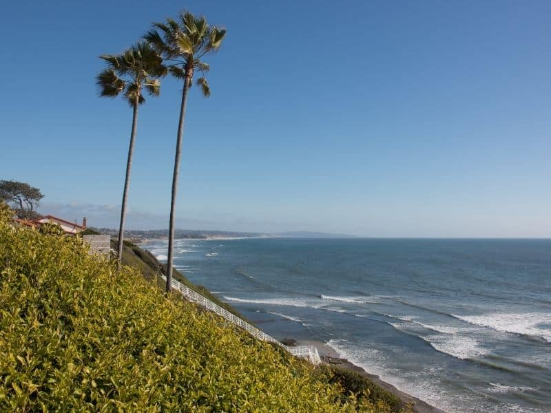 palm trees along the ocean edge in the beautiful town of encinitas california not far from san diego