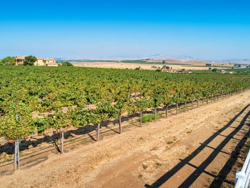 vineyards in livermore valley at a winery