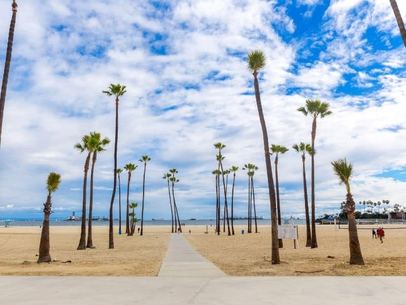 boardwalk in front of a beach with palm trees and people walking on the beach