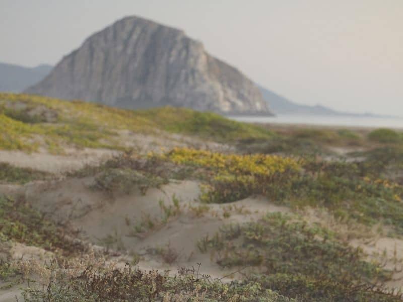 detail on the sand dunes near morro rock