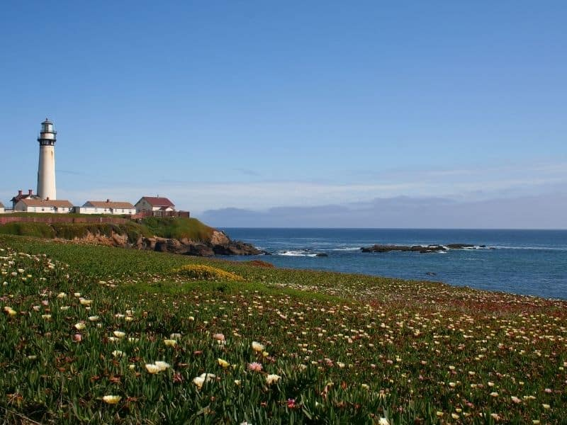 the scenic pigeon point lighthouse surrounded by wildflowers and the pacific ocean