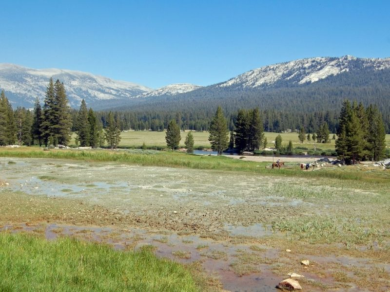 the view around soda springs in tuolumne meadows with some horses visible in the distance