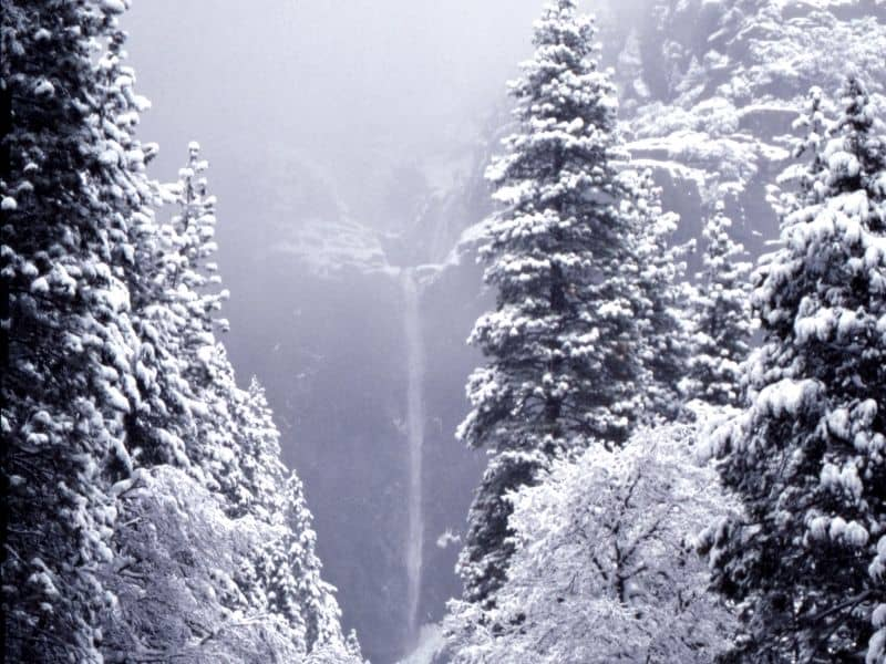 snow-covered trees in yosemite in winter and the thin trickle of Yosemite falls cascading over a cliff