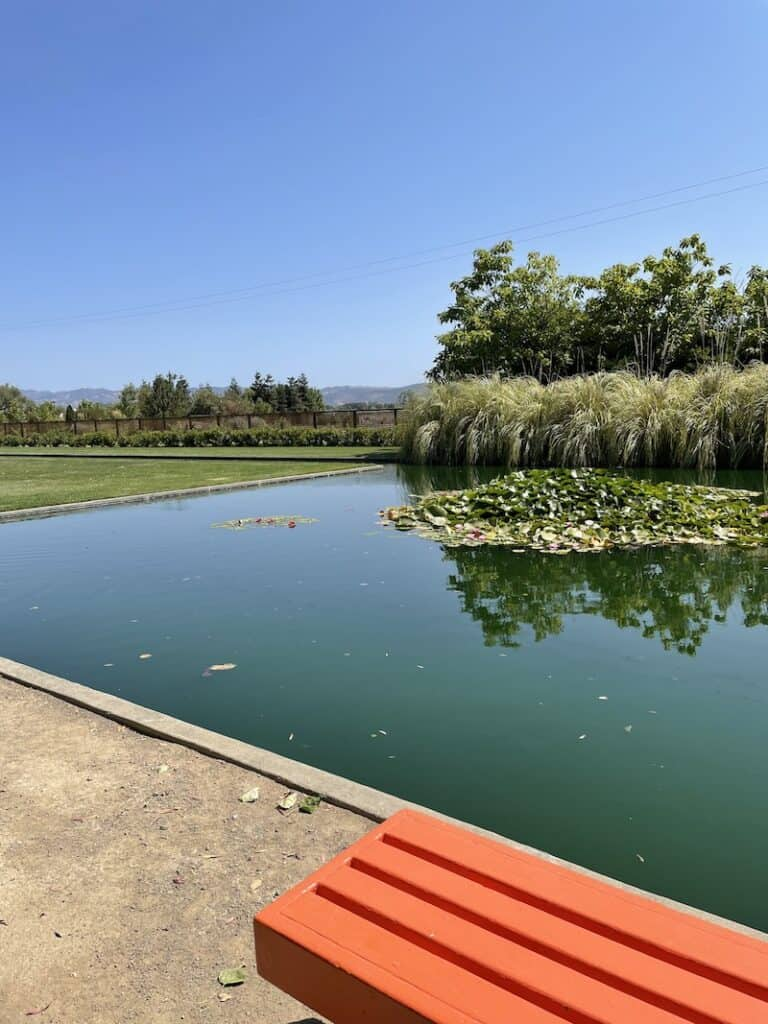pond in sonoma with lily pads